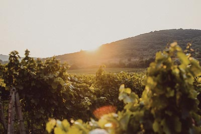 degustation selection un pied dans le vignoble2